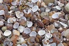 许多类型和大小壳在我们轰击的海滩被找到 免版税库存图片