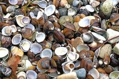 许多类型和大小壳在我们轰击的海滩被找到 免版税图库摄影
