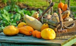 许多水果和蔬菜是为调味品 免版税库存照片