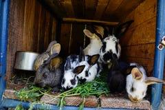 许多年轻甜兔宝宝在棚子 一个小组在脱粒场的小五颜六色的兔子家庭饲料 复活节标志 库存照片
