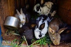 许多年轻甜兔宝宝在棚子 一个小组在脱粒场的小五颜六色的兔子家庭饲料 复活节标志 库存图片