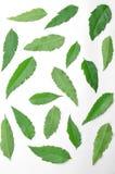 许多绿色neem叶子在地板上传播了 库存照片