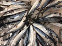 许多Saba鱼结冰 图库摄影