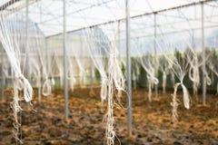设定一个温室起点阶段  被施肥的土壤在温室里 免版税库存照片