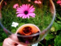 设拉子红葡萄酒庭院在春天的花题材啜饮的玻璃  免版税库存图片