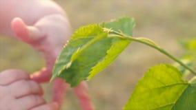 设法婴孩的手到达绿色叶子 人类本性 接触树的孩子的胳膊 Eco生活 特写镜头,慢动作 股票录像