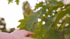 设法婴孩的手到达绿色叶子 人类本性 Eco生活 接触树的孩子的胳膊 特写镜头,慢动作 股票录像