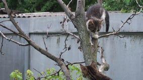 设法平纹的小猫爬树 股票视频