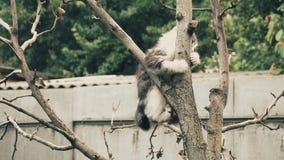 设法平纹的小猫爬树 股票录像