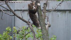 设法平纹的小猫击倒树 股票录像
