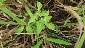 设法树的植物开发在灌木 免版税库存图片