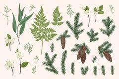 设置与冬天植物 向量例证