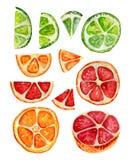 设置与桔子、葡萄柚和石灰段 免版税库存图片