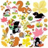 设置与森林秋季收获  免版税库存图片