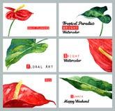 设置与水彩卡片 热带红色水芋属和叶子 库存照片