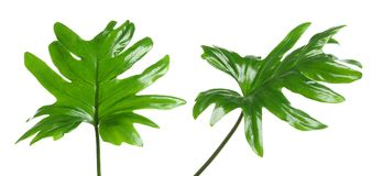 设置与热带爱树木的人叶子 库存照片