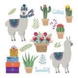 设置与花、仙人掌和多汁植物的被隔绝的逗人喜爱的骆马在白色背景 皇族释放例证
