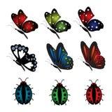 设置与蝴蝶和瓢虫 向量例证