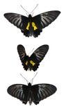 设置与蝴蝶 图库摄影
