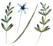 设置与野花 背景查出的白色 库存照片