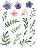 设置与水彩紫罗兰色花和绿色叶子 免版税图库摄影