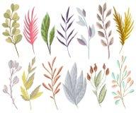 设置与幻想植物和叶子 花卉装饰设计要素 免版税库存图片