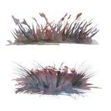 设置从湖草的背景 背景查出的白色 免版税库存图片