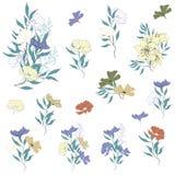 设置传染媒介花 夏天花,手拉在白色背景 对装饰,卡片,织品,邀请,瓦片 向量例证
