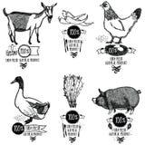 设置农厂新鲜的自然产品鸡山羊鸭子猪 库存照片