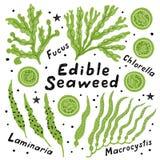 设置可食的海草:昆布属植物、macrocystis、小球藻和墨角藻属植物 滑稽的乱画手拉的动画片传染媒介例证 向量例证