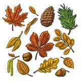 设置叶子、橡子、栗子和种子 传染媒介被刻记的葡萄酒颜色 库存例证