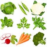 设置向量蔬菜 库存照片
