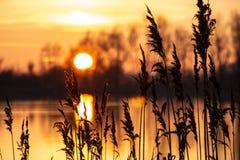 设置在有芦苇的湖的太阳在前景 免版税库存图片