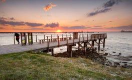 设置在植物学海湾的金黄太阳 库存照片