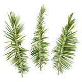 设置在白色背景的棕榈树分支 免版税库存照片