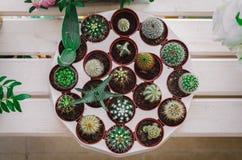 设置在罐的仙人掌在花店 免版税库存照片
