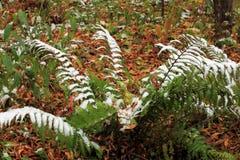 设置在草、叶子和树的雪 俄国,秋天 库存照片