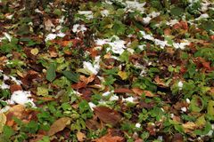 设置在草、叶子和树的雪 俄国,秋天 免版税库存照片