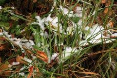 设置在草、叶子和树的雪 俄国,秋天 库存图片