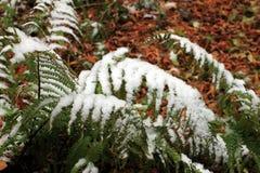 设置在草、叶子和树的雪 俄国,秋天 图库摄影