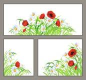设置夏天花鸦片,在白色查出的雏菊 免版税库存照片