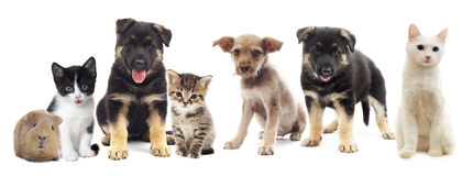 设置宠物 库存图片