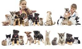设置宠物 免版税库存图片