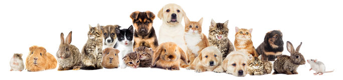 设置宠物 免版税库存照片