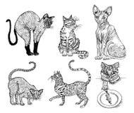 设置家谱猫 小猫汇集 传染媒介例证,线艺术象  拉长的现有量宠物 被刻记的葡萄酒 库存例证