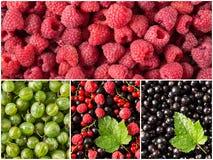 设置新鲜的莓果,莓,无核小葡萄干,鹅莓,黑醋栗 免版税库存图片