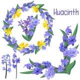 设置春天风信花和黄水仙的装饰品 向量例证