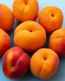 设置杏子被安置以花的形式 免版税图库摄影