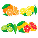 设置果子橙色葡萄柚柠檬石灰 库存照片