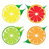 设置果子橙色葡萄柚柠檬石灰 免版税库存照片